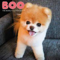Chien Boo : Découvrez son histoire
